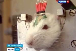cyber patkány