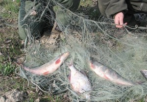 orvhalászok