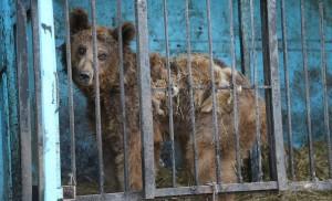 örmény állatkert
