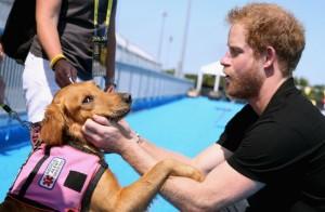 harry és a kutya