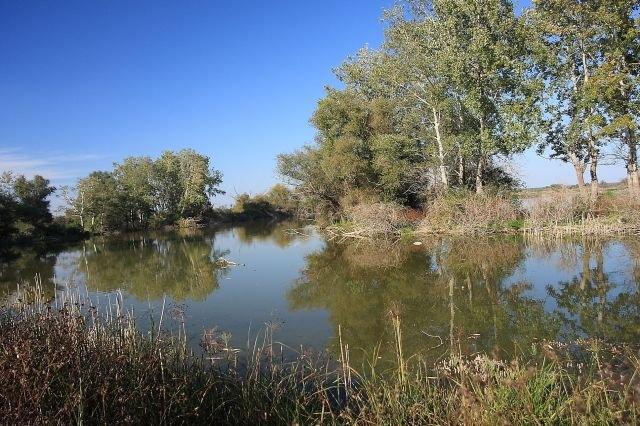 ... hatásokkal szemben – olvasható a WWF Magyarországnak a február  másodikai Vizes élőhelyek világnapja alkalmából az MTI-hez eljuttatott  közleményében. db9f3ccea9