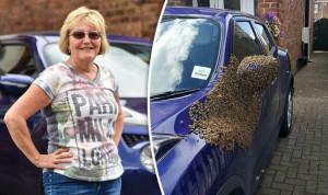 méhek a kocsiban
