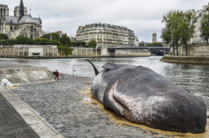 Döglött bálna Párizsban