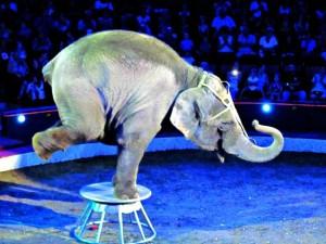 great-circus-nagy-cirkusz