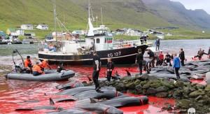bálna vadászat 3