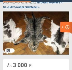 macska prém