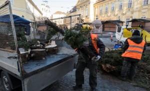 fehérvári feldőlt fa