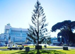 róma karácsonyfa