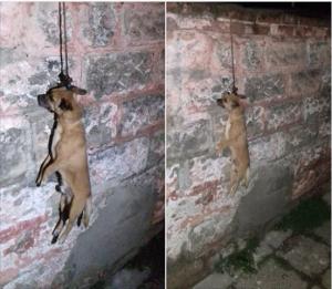 felakasztott kutya szekszárd