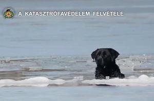 naplás tó kutya jég
