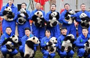pandák hold új év